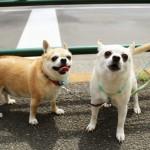 ペット用熱中症対策グッズランキング2016|犬や猫が喜ぶのはコレ!