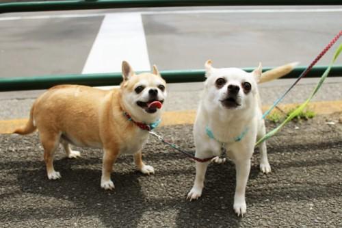 2836a398352d6d771c5c2024c016f0bf s 1 500x333 ペット用熱中症対策グッズランキング2016|犬や猫が喜ぶのはコレ!
