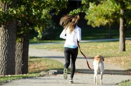 493b0030d52ed929fdcba7d1d30764b0 s 1 500x331 ペット用熱中症対策グッズランキング2016|犬や猫が喜ぶのはコレ!