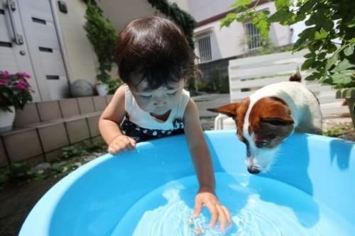 939a79d0a787dd421219132f57cdfcc4 s 1 500x333 ペット用熱中症対策グッズランキング2016|犬や猫が喜ぶのはコレ!