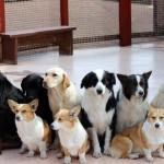 ペット(犬や猫)の静電気対策|除去する方法とおすすめグッズまとめ