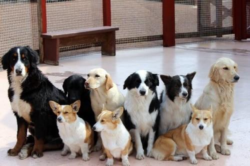 b3d079967d12d9b2b1743ef9eb7fa8af s 1 500x333 ペット(犬や猫)の静電気対策 除去する方法とおすすめグッズまとめ