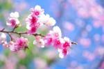 a3a2aa1d2bc1b736959b01f021cee3ae s 150x99 敬老の日に花をプレゼント!選ぶべき花と喜ばれる花言葉10選