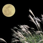 十五夜には何をする?月見の楽しみ方といろいろな月見団子をご紹介
