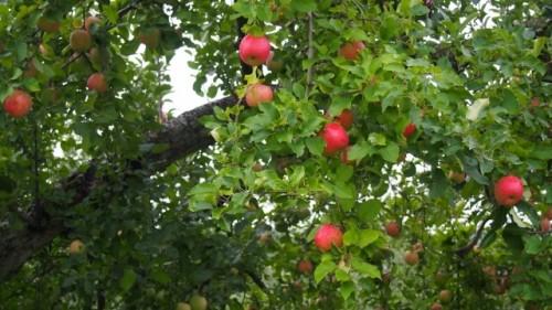 210 500x281 【東北・秋の味覚】おすすめの観光農園3選、人気のフルーツは?