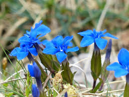 219 敬老の日に花をプレゼント!選ぶべき花と喜ばれる花言葉10選