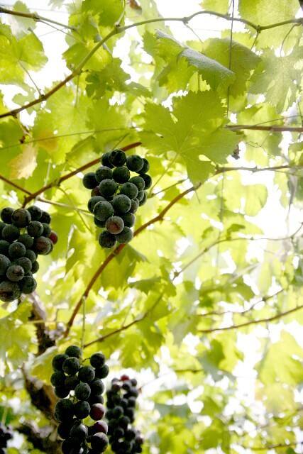 image001 1 【関東のフルーツ狩り】秋の味覚を楽しめる人気の農園ランキング!