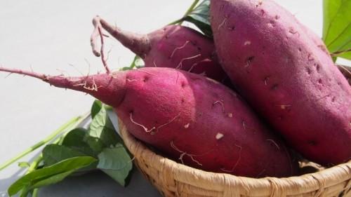 210 500x281 主婦必見!美味しいサツマイモの選び方|人気の品種とレシピもご紹介♪