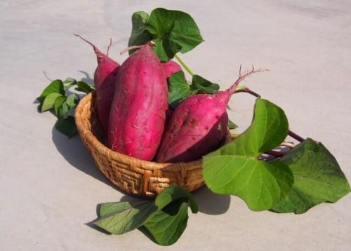 211 500x358 サツマイモの賞味期限と冷凍保存方法 芽が出ても食べれる?