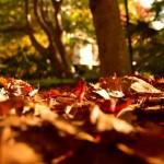 『秋の高尾山』登山の服装は?気象情報や持ち物リストまとめ