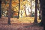 16 150x100 【大阪城公園の紅葉】見ごろとライトアップの時間は?ベストスポット3選