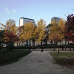 【大阪城公園の紅葉】見ごろとライトアップの時間は?ベストスポット3選