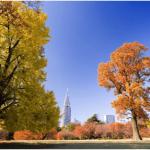 新宿御苑の紅葉の時期と3つの見どころ|入園料金と駐車場情報まとめ