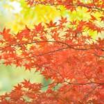 養老渓谷の紅葉祭り2016|日程や見ごろ時期をご紹介♪ライトアップ時間は?