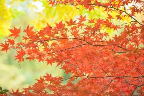 12 500x333 養老渓谷の紅葉祭り2016 日程や見ごろ時期をご紹介♪ライトアップ時間は?
