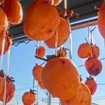甘くて美味しい干し柿を自宅で作る3つのコツ!渋柿と甘柿の違いと焼酎を使う理由