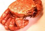 11 150x105 余った刺身は冷凍保存できる?賞味期限と後日美味しく食べる調理方法