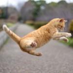 これで安心!猫の糞尿対策まとめ|効果がある防ぎ方と臭い消し方法