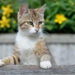 【野良猫対策】駆除の仕方と近所の餌やりを止めさせる方法!保健所に相談するべき?