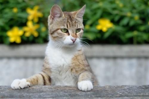 16 500x333 【野良猫対策】駆除の仕方と近所の餌やりを止めさせる方法!保健所に相談するべき?