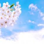 【桜の開花宣言】基準は何?誰が決めるの?各地の測定場所は?