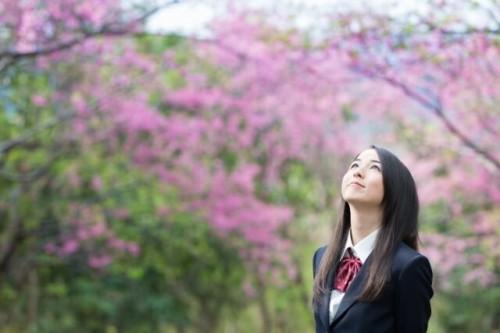21 500x333 【桜の開花宣言】基準は何?誰が決めるの?各地の測定場所は?