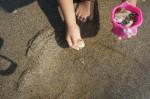 1 11 150x99 潮干狩りで採れる貝の見分け方!正しい持ち帰り方と保存方法