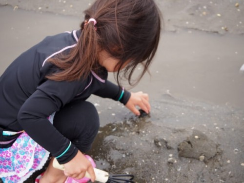 1 12 500x375 潮干狩りで採れる貝の見分け方!正しい持ち帰り方と保存方法