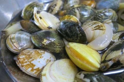 2 11 500x332 潮干狩りで採れる貝の見分け方!正しい持ち帰り方と保存方法