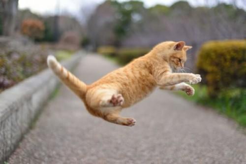 15 500x333 これで安心!猫の糞尿対策まとめ 効果がある防ぎ方と臭い消し方法